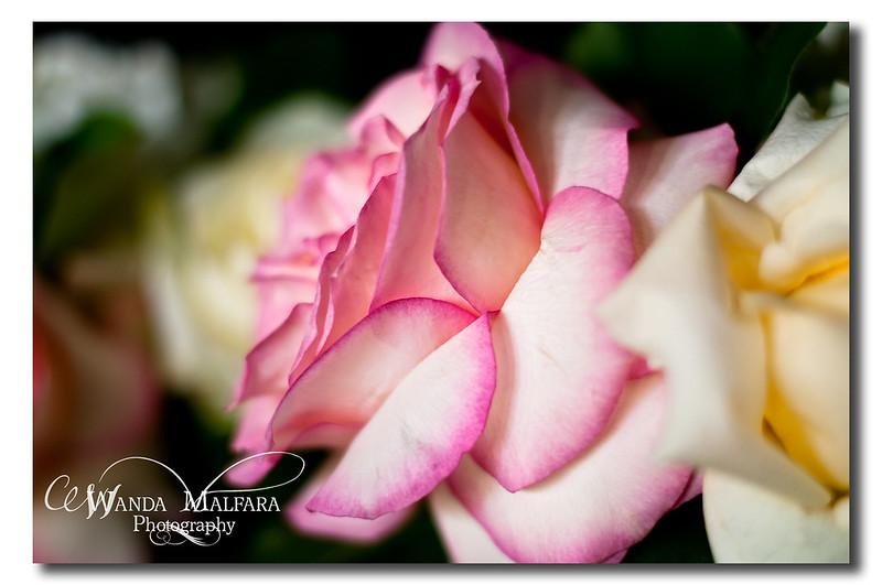 Flowers 014 wm
