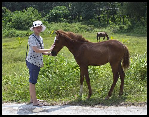 Girl meet horse