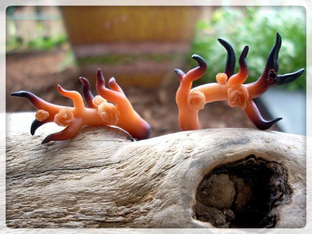Antlers (burned)