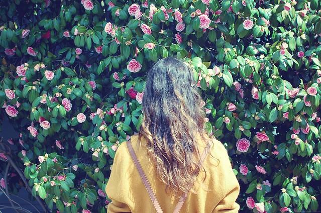 rose head 3