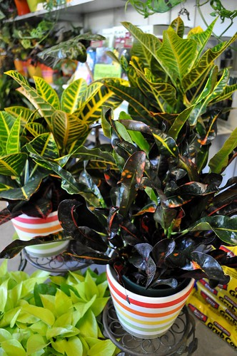 Monday mission get some air filtering plants for Air filtering plants