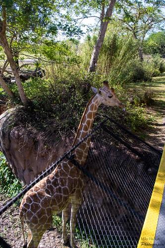 Busch Gardens Fl