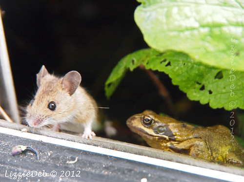 Wildlife on my doorstep {On BBC Nature website on May 1st} Copyright; Elizabeth Debenham