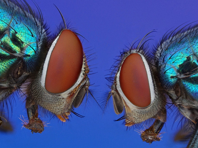 7191333770 cf0988e28e z 25 Insanely Detailed Macro Images Of Insects