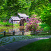 Rhododendron at Mabry Mill 02 by Jim Dollar