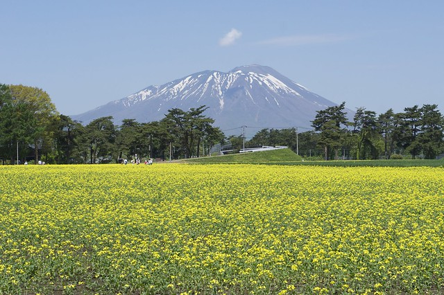 Photo:Rape field in Agricultural Research Centre By:yisris