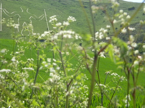 Long Man with cow parsley