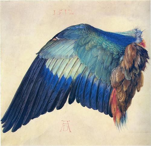 Dürer: Blaurackenflügel [1512] by petrus.agricola
