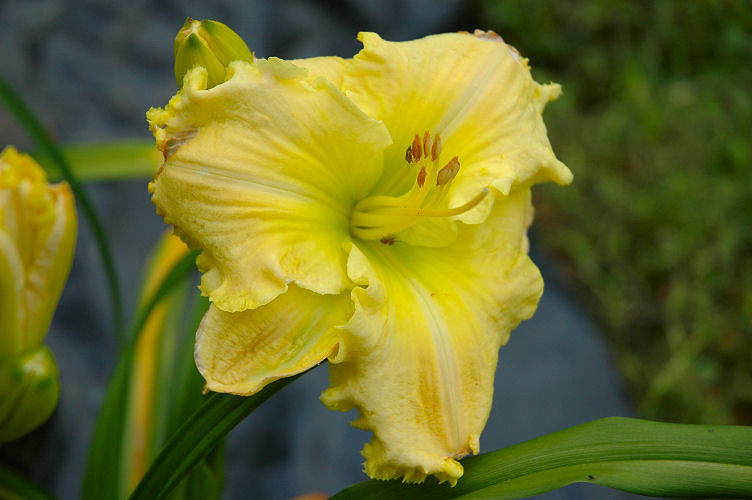 R_UNK large yellow ruffles2