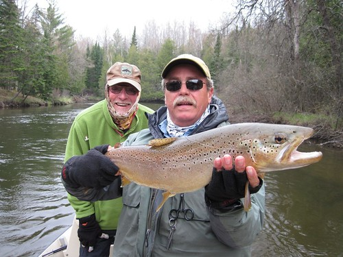 Pictures of the Day: Huge Manistee River Brown Trout - Orvis