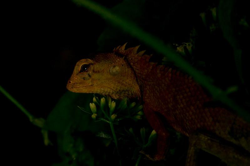 a 'wise' lizard