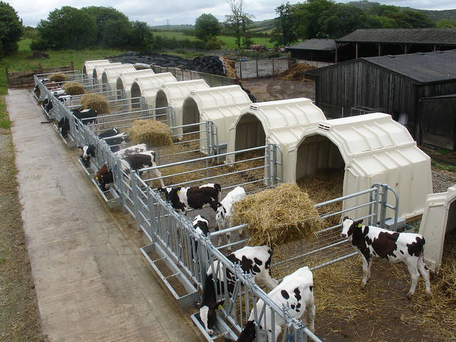 Calf Tel Housing A Gallery On Flickr