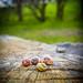 Schneckenhaus - Snail shell by Daniel Klitzsch