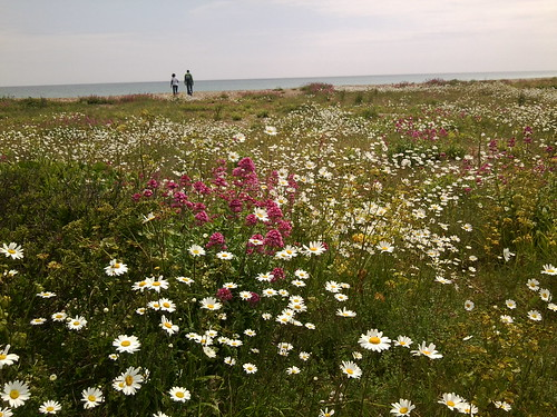 Flowers, Deal Beach