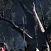 Assassin's Creed III Pre-Order – Now Available On PlayStation Store