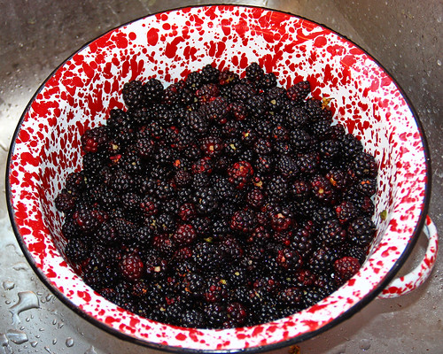 Yummy Blackberries!