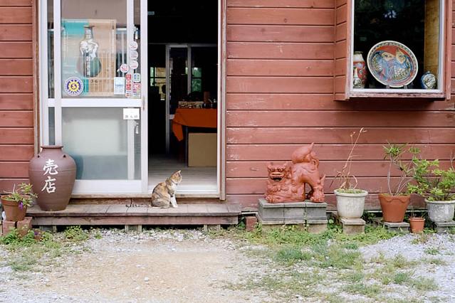 シーサー(右)と、シーサー風の猫(左) / Shisa (right) and Shisa-like cat (left)