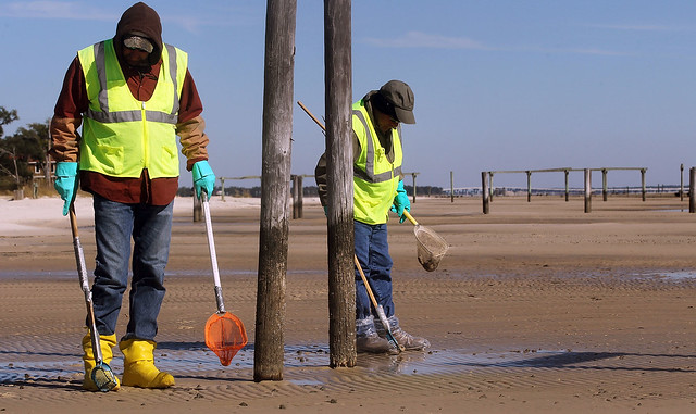 BP workers clean Mississippi beach