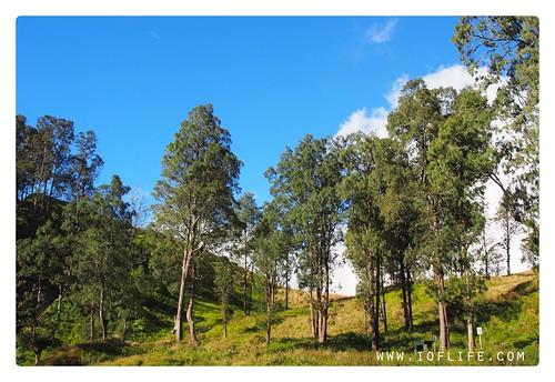 pepohonan1