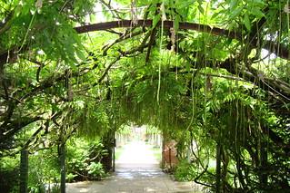7.  150yr wisteria arch