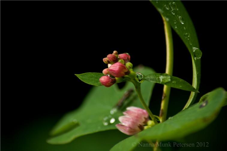 mørkt vand med blomst collage