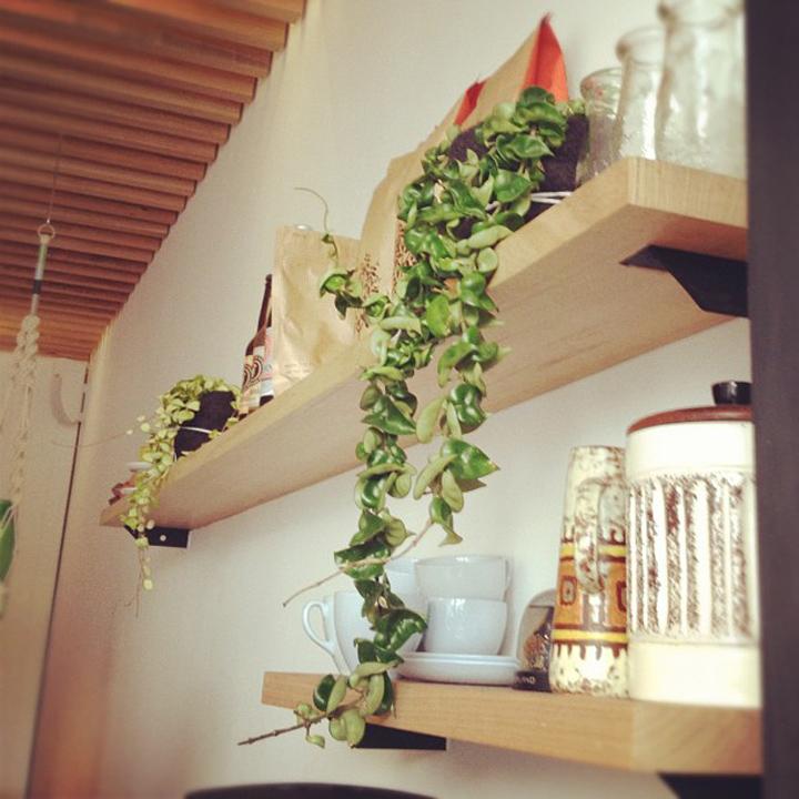laneway_esme instagram cafe melbourne cheerio plant