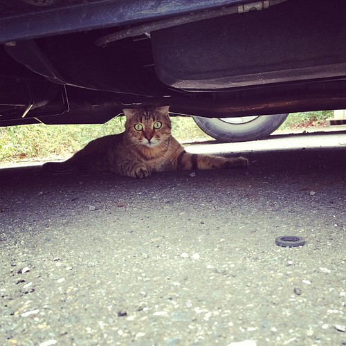 under the car