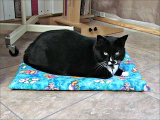 Sombra on her cat cushion