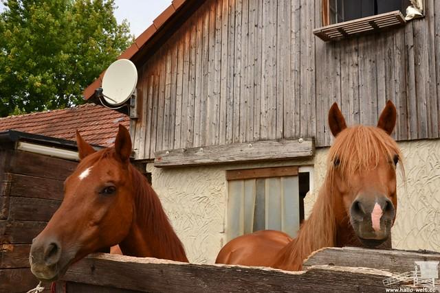 Pferdehof (12)