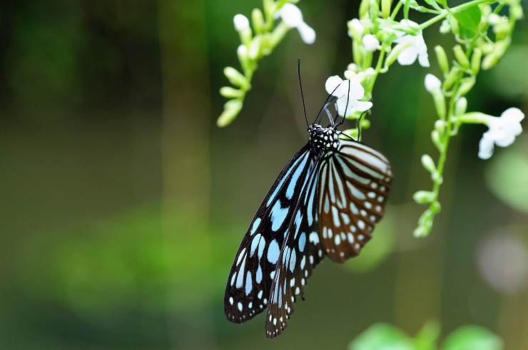高雄金獅湖蝴蝶園真是好地方