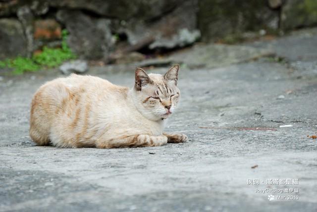 2010_0330_侯硐。滿滿都是貓DSC_0015
