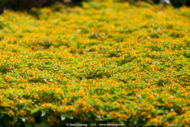 flower_Tapseac-0188