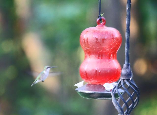 humming1