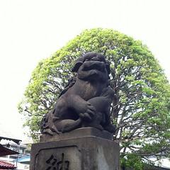 狛犬探訪 東嶺町の白山神社 阿吽とも子連れ