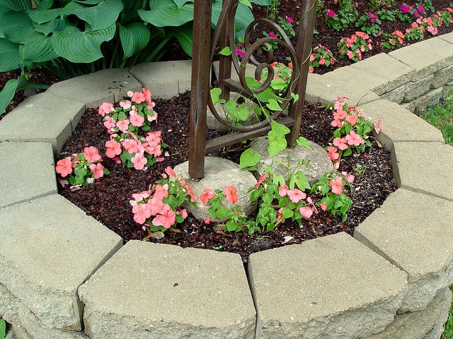 Impatiens and morning glory vine