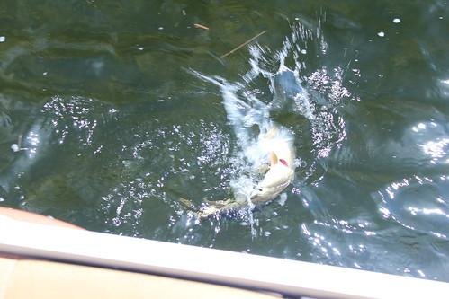 Buck Lake 2012 020
