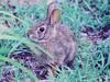wild bunny by ★☆KIU WORLD☆★