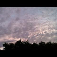 一昨日の夕方の空。淡いピンク色の雲。 Sky of the evening of the day before yesterday. The clouds of  light pink. #雲 #sky #空