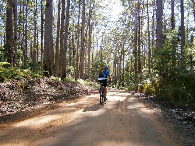 Mapleton Forest