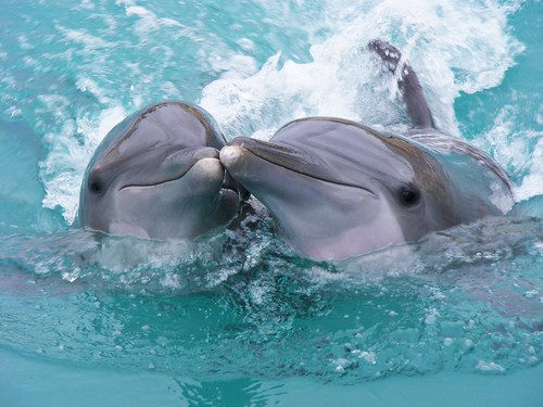 Dolphinaris 1