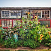sunflower farm by gail des jardin