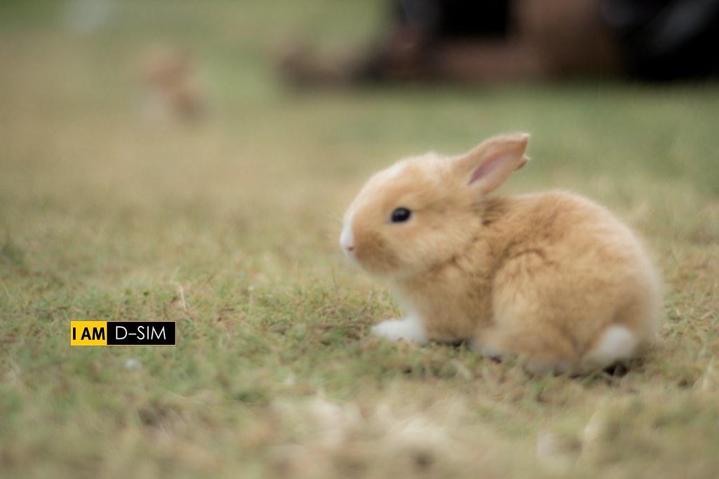 Baby Rabbit (22)