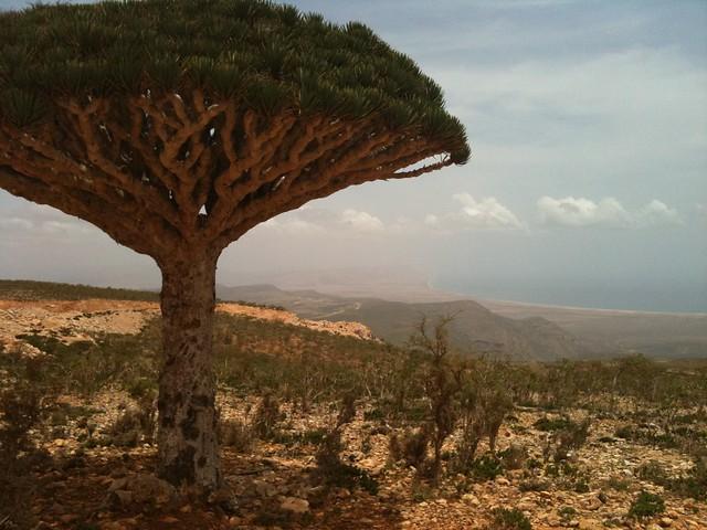 Yemen - Socotra