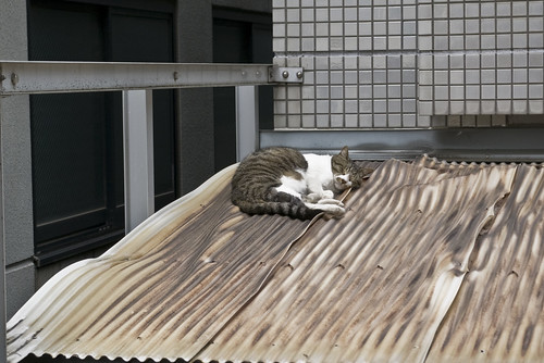 Cat_2012-07-06N04