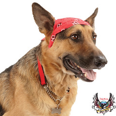 bret michaels dog red bandana