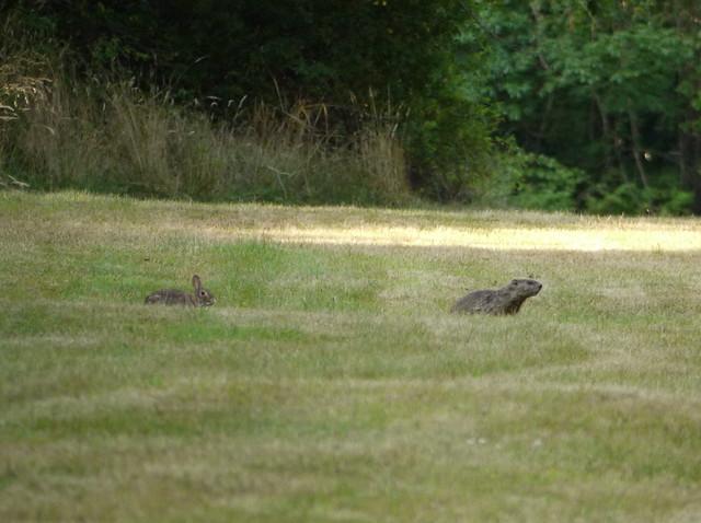 rabbit and groundhog 2