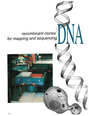 DNA Libraries Recombinant Clones for Mapping and Sequencing