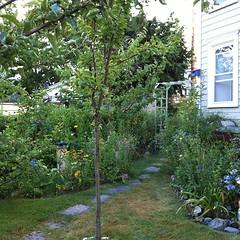 my centering place #organicgarden #urbangarden #garden #maine #meditation