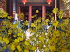 珠山75號民宿(慢漫民宿夢想館)花團錦簇