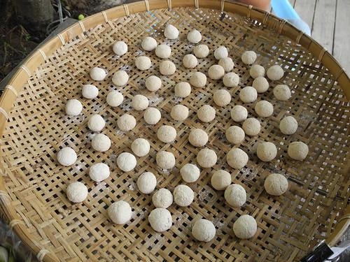 由海稻米和大葉田香草揉合而成的酒麴,正以緩慢的步調膨脹。